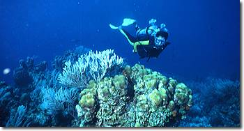 SCUBA diving off the cayes off the Belize District